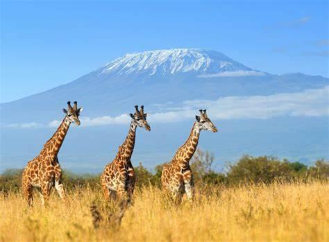 Kenya : Conseils de voyage